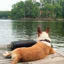 Small dog on dock  2
