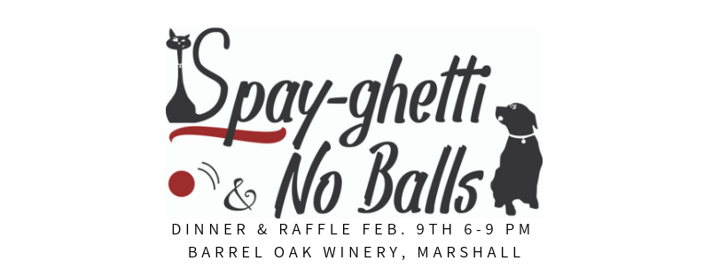 Spay-ghetti & No Balls Dinner  image