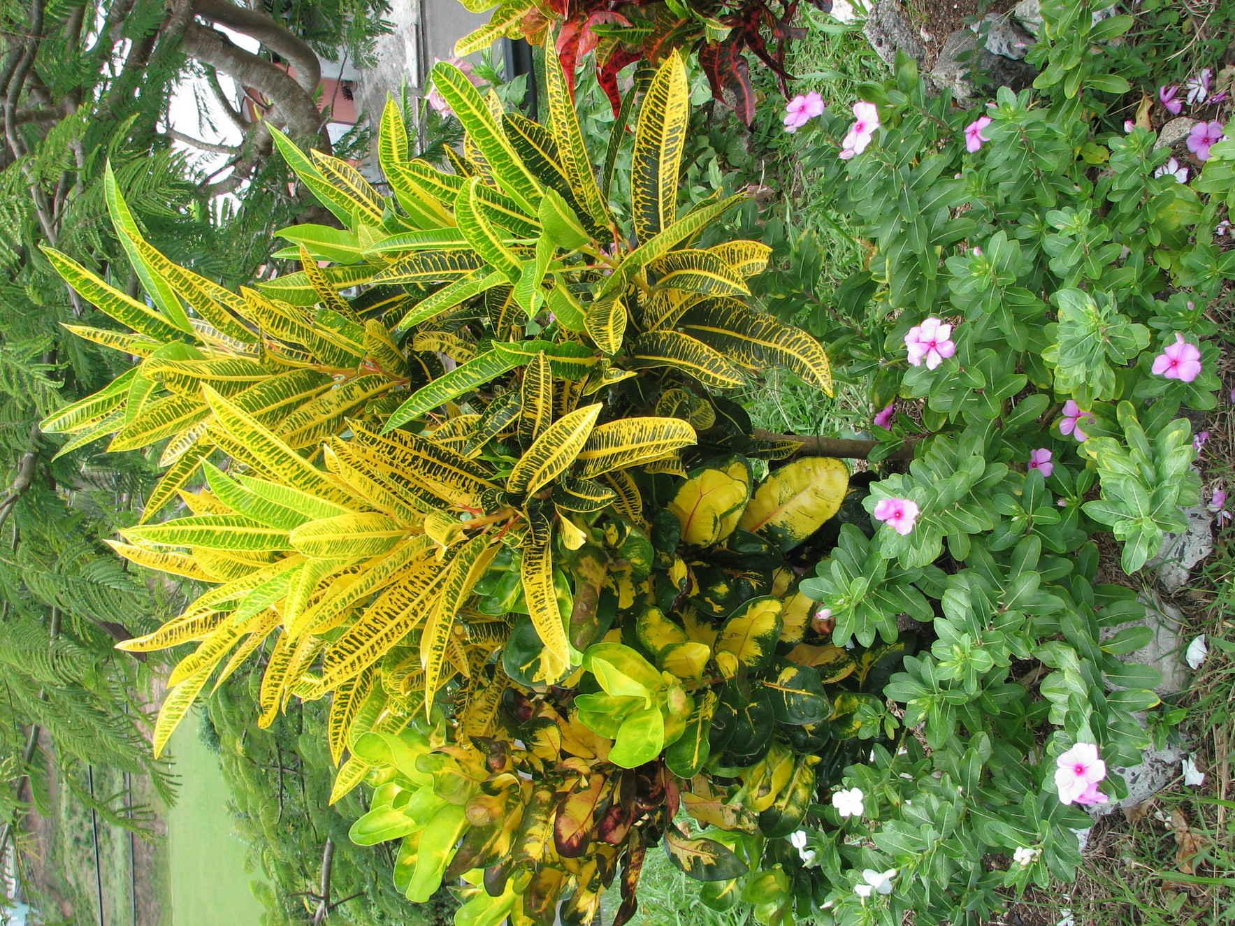 Plant Journaling 101 image