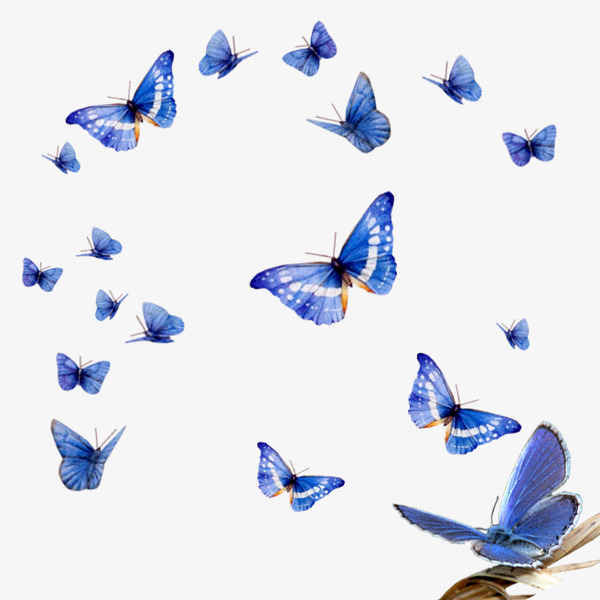 Butterfly Ball image