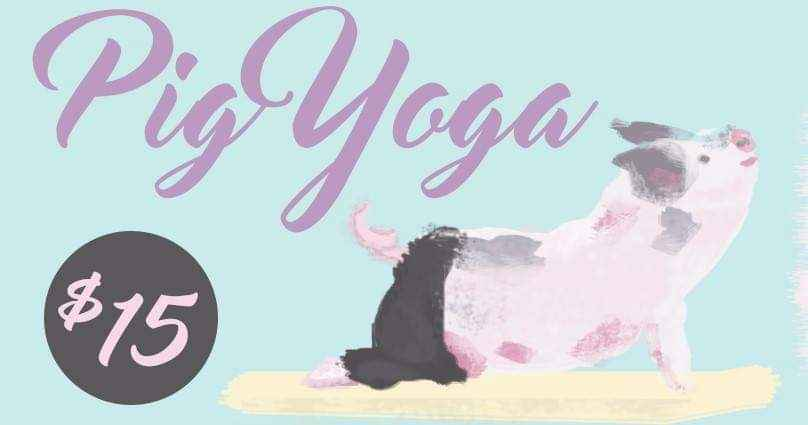 Pig Yoga at Rooterville image