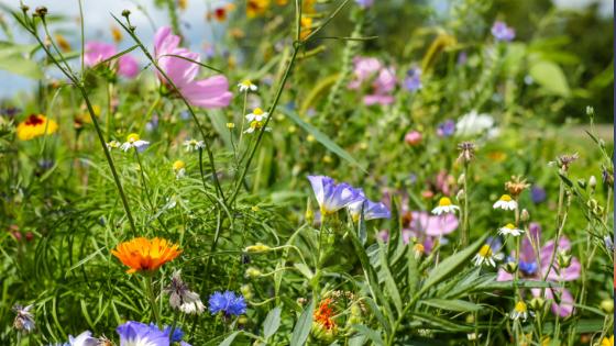 Edible Weeds Walk & Talk image