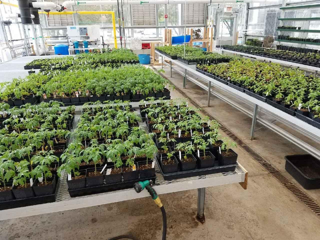Seedling CSA! image