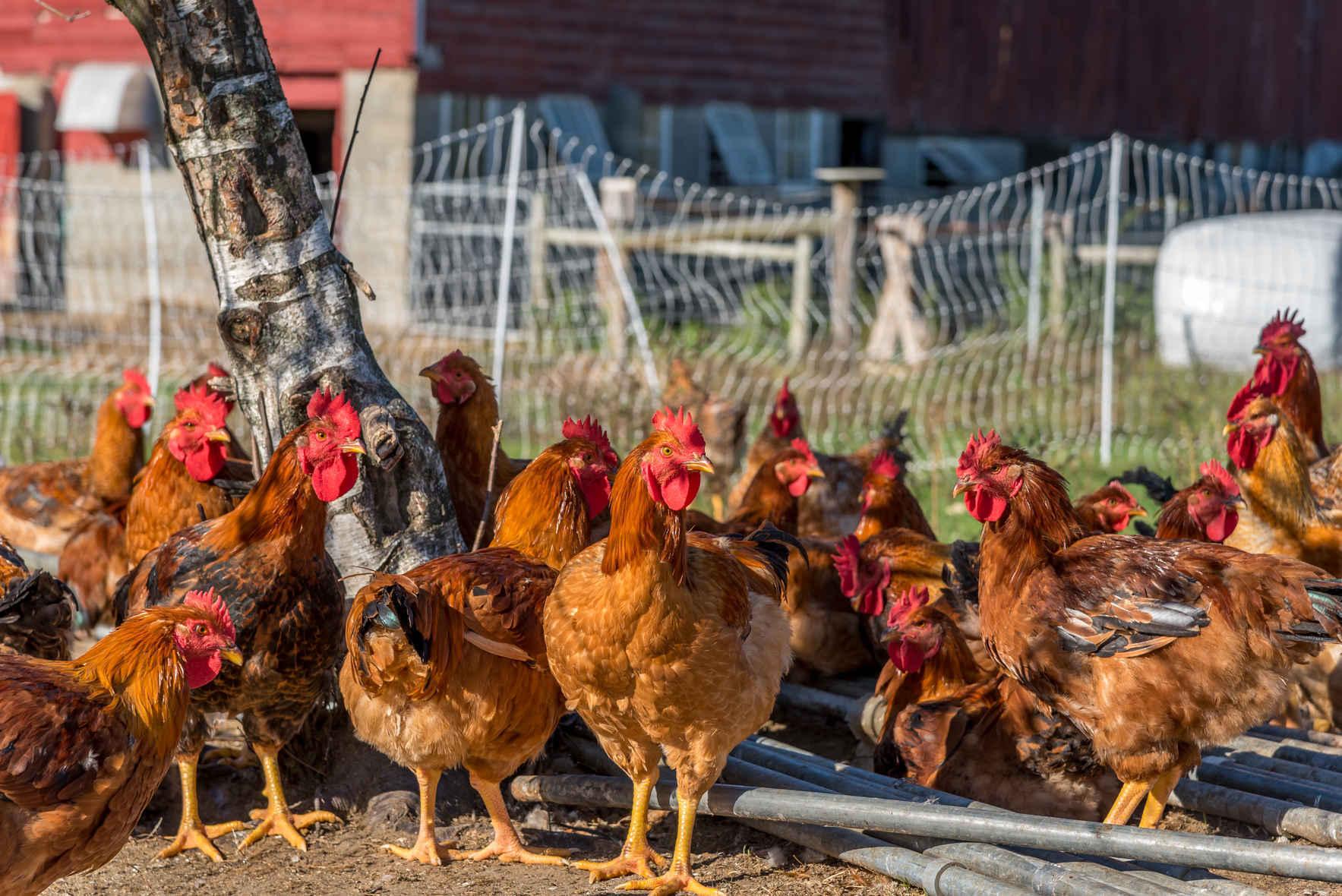 Pine Island Community Farm Public Tour image