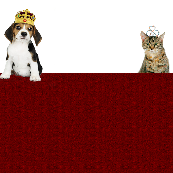 A Royal Affair: Reigning Cats & Dogs image