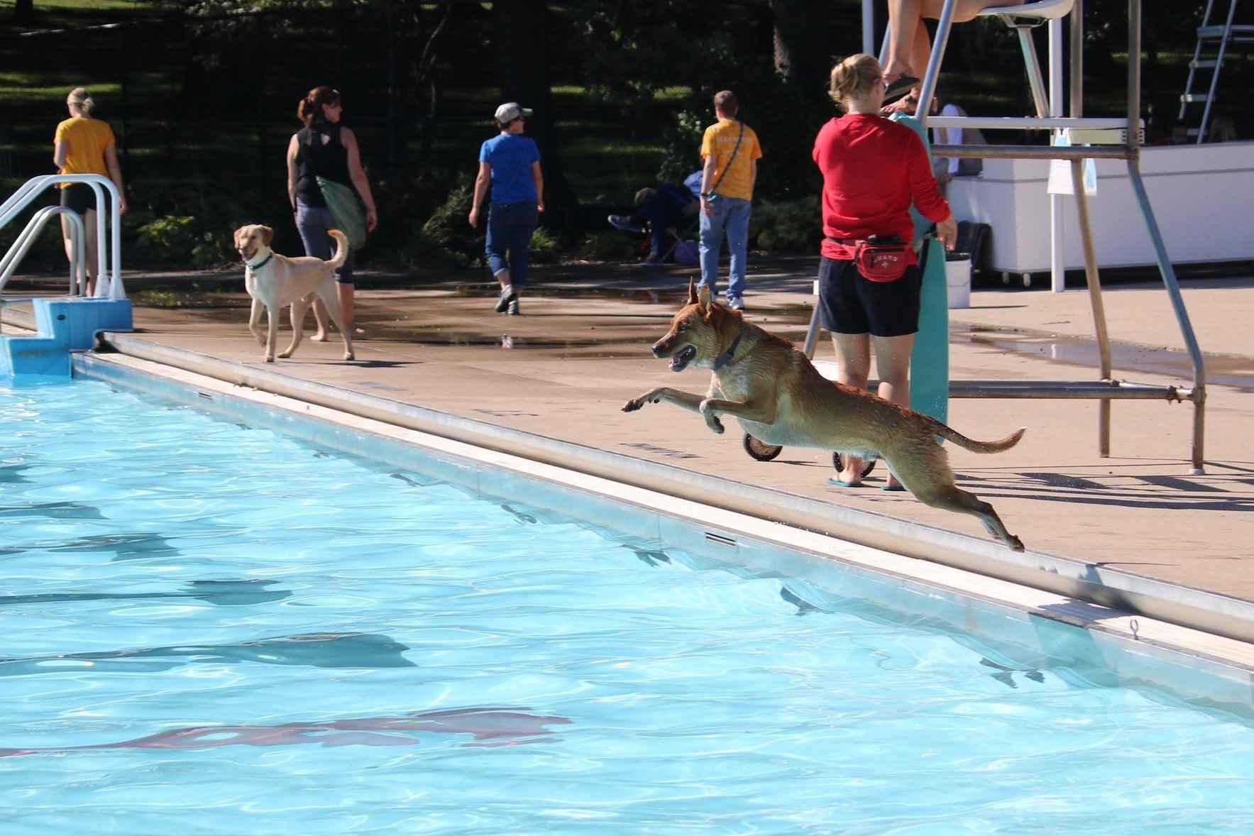 Dog Paddle - Annual Dog Swim image