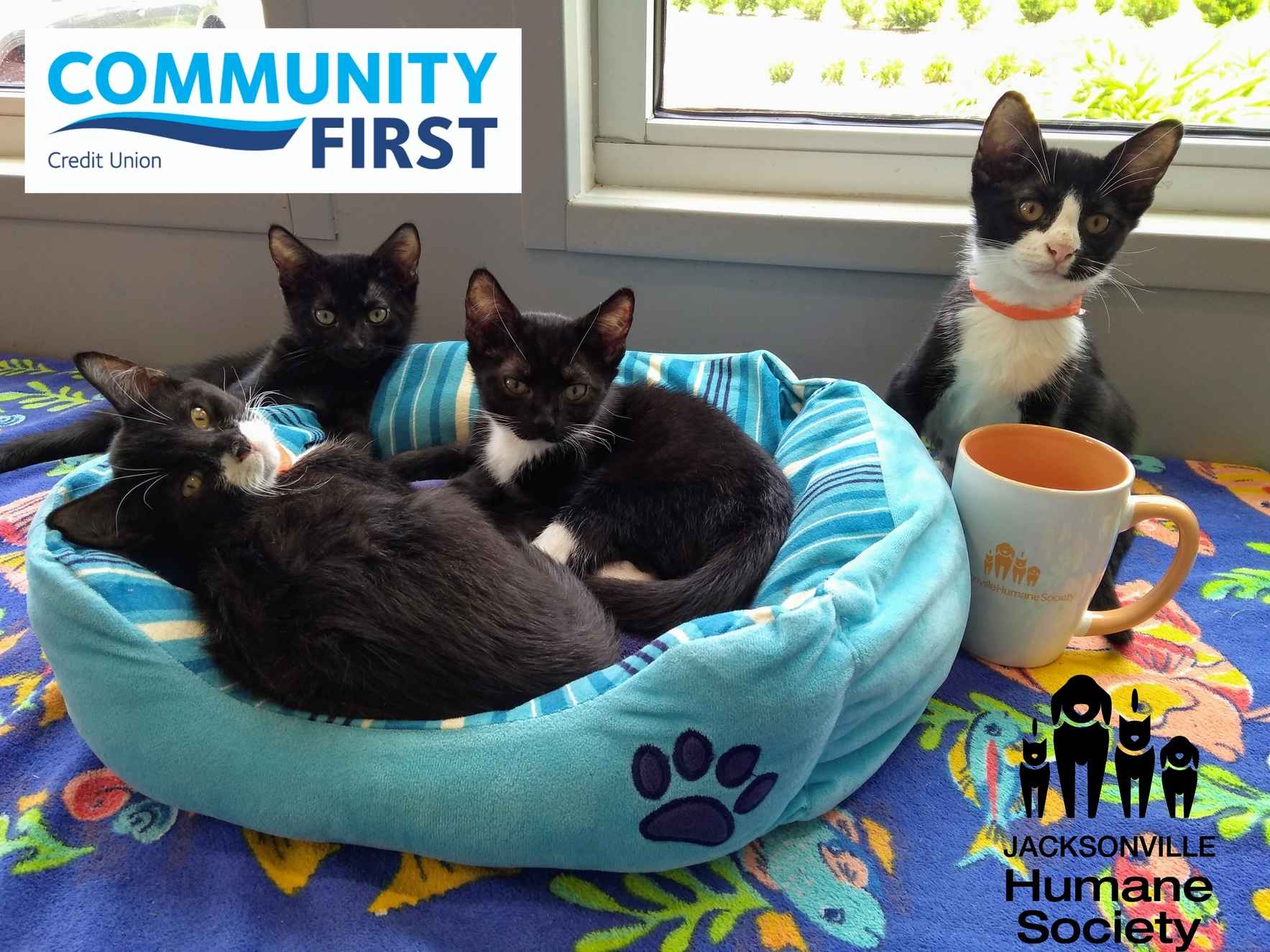 Pop-up Cat Cafe` supported by Community First Credit Union  image