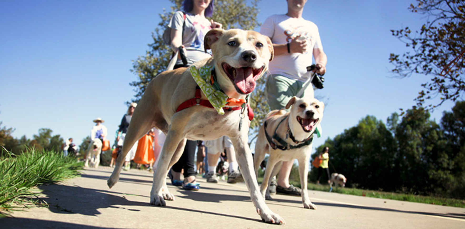 Paws for a Cause Dog Walk image