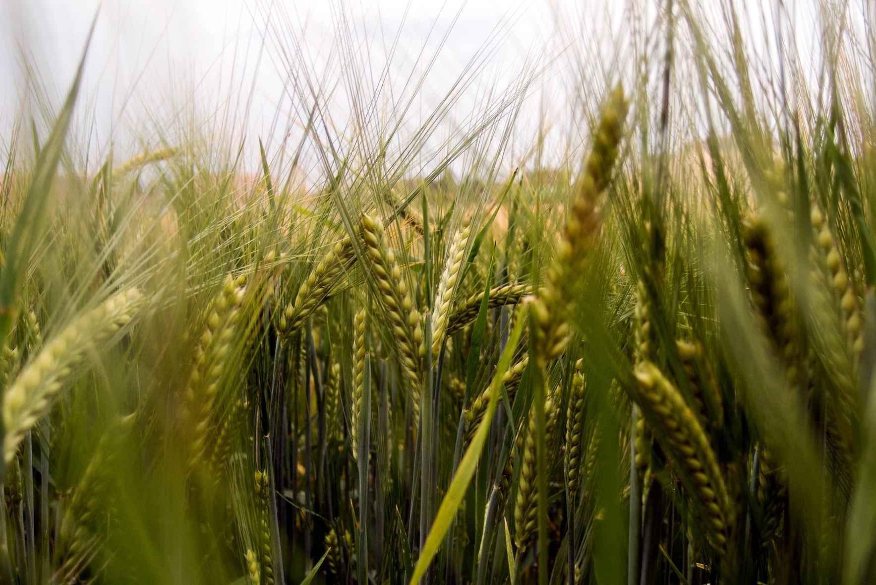 Small Scale Grain Workshop image