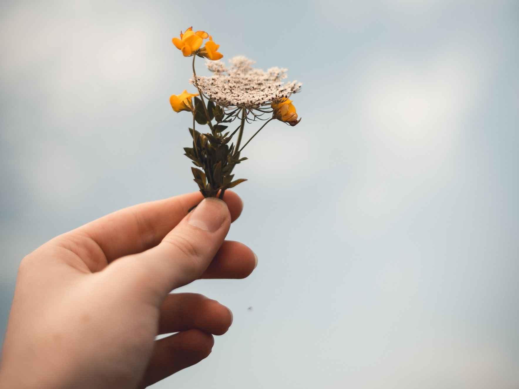 Mindful Self-Compassion Retreat & Workshop image