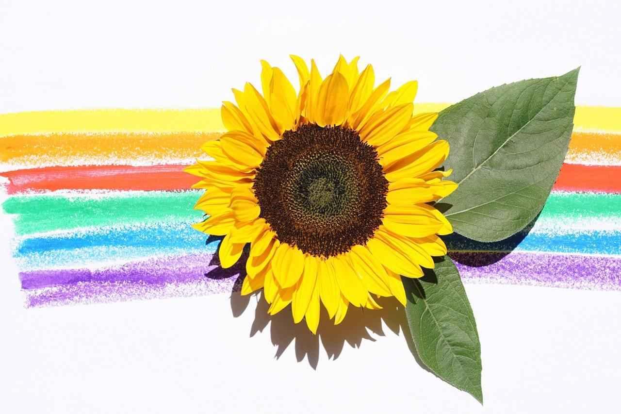 Sunflower Breakfast 2019 image