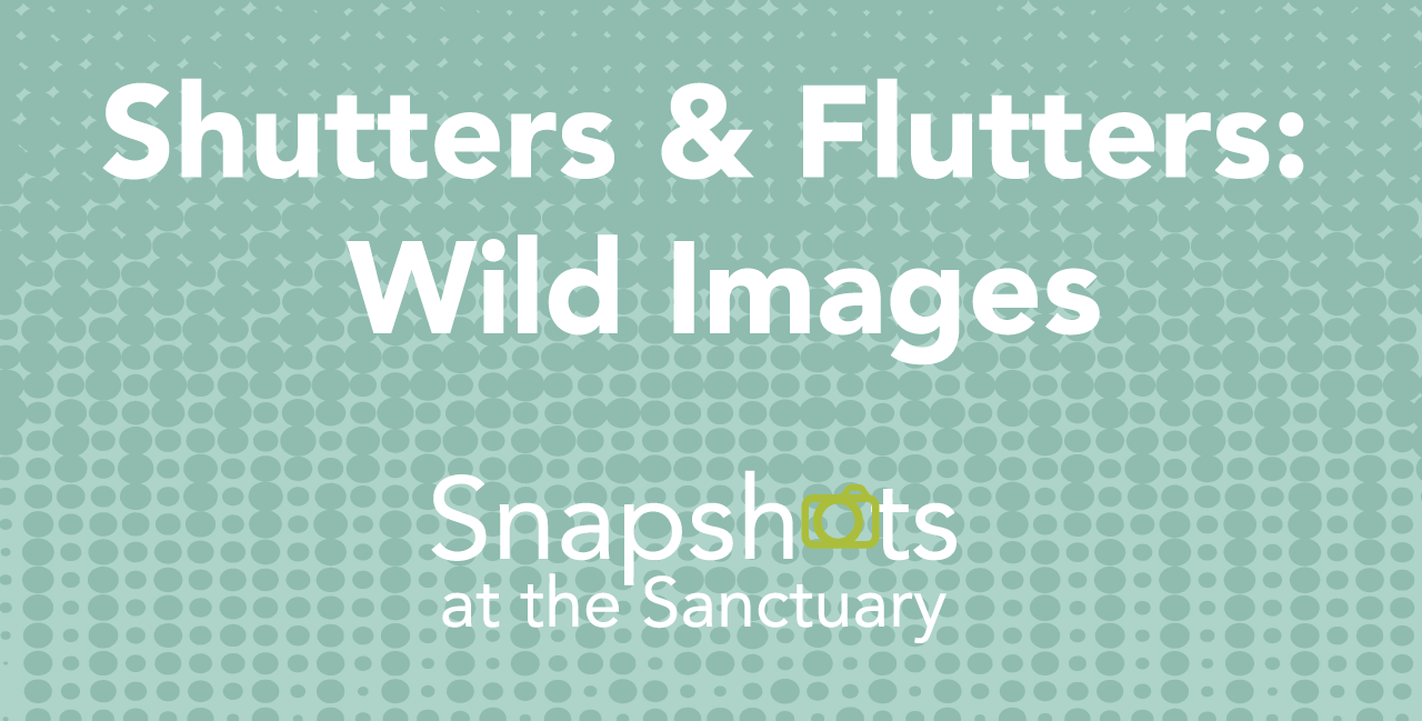 Shutters & Flutters: Wild Images image