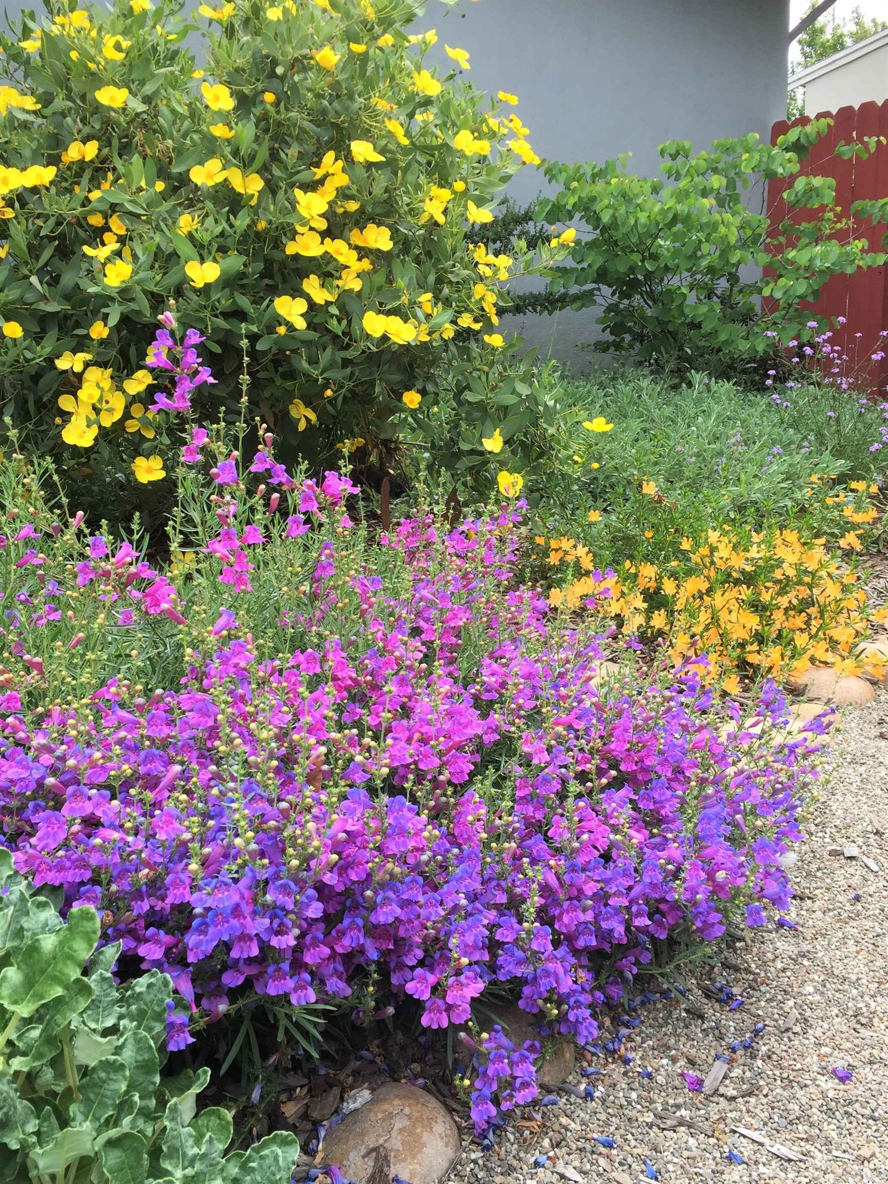 Grow Native Plant Sale and Workshop - Oct 25, 2019 image