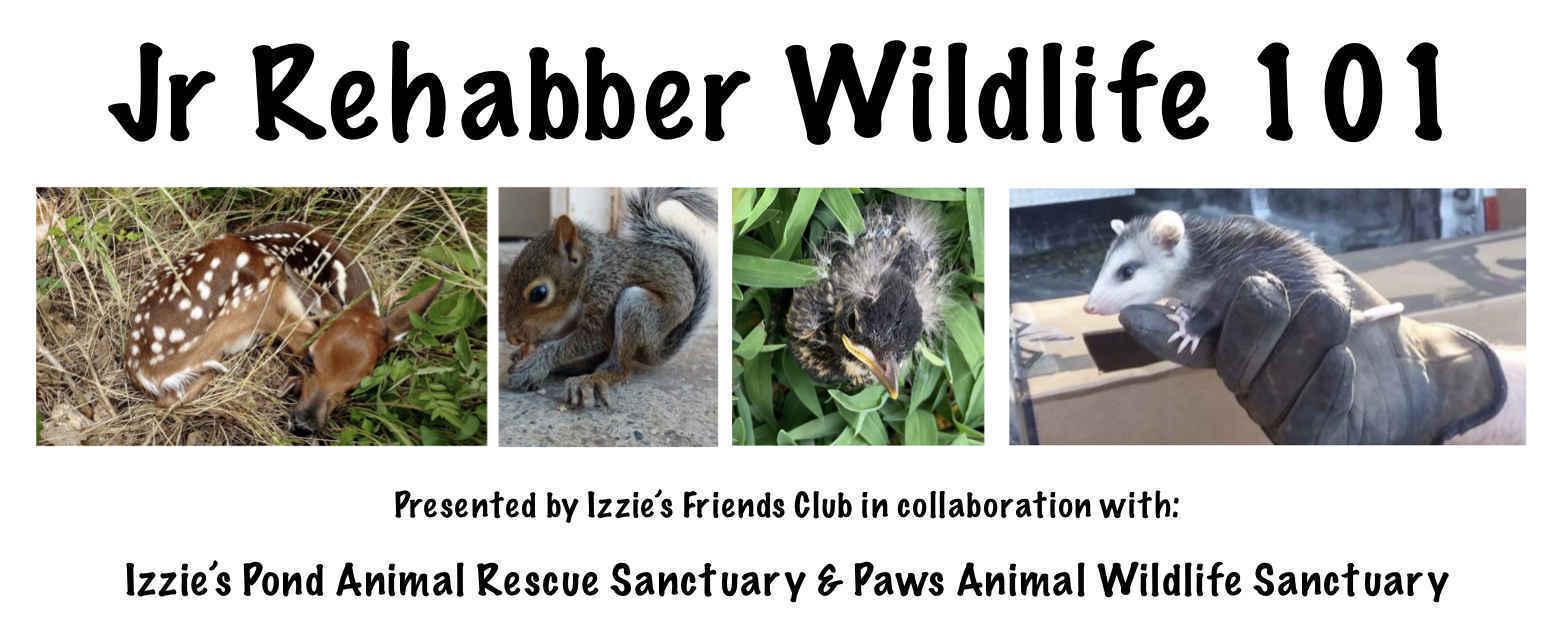 Jr Rehabber Wildlife 101 image