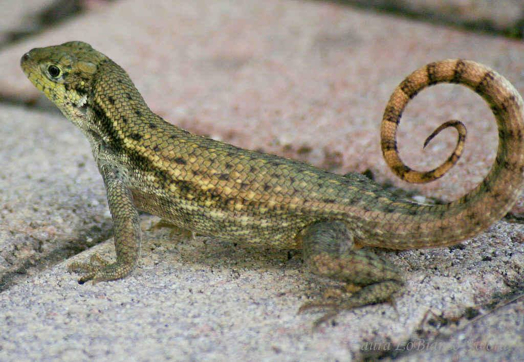 Reptile Invasions: Your Backyard and Beyond image