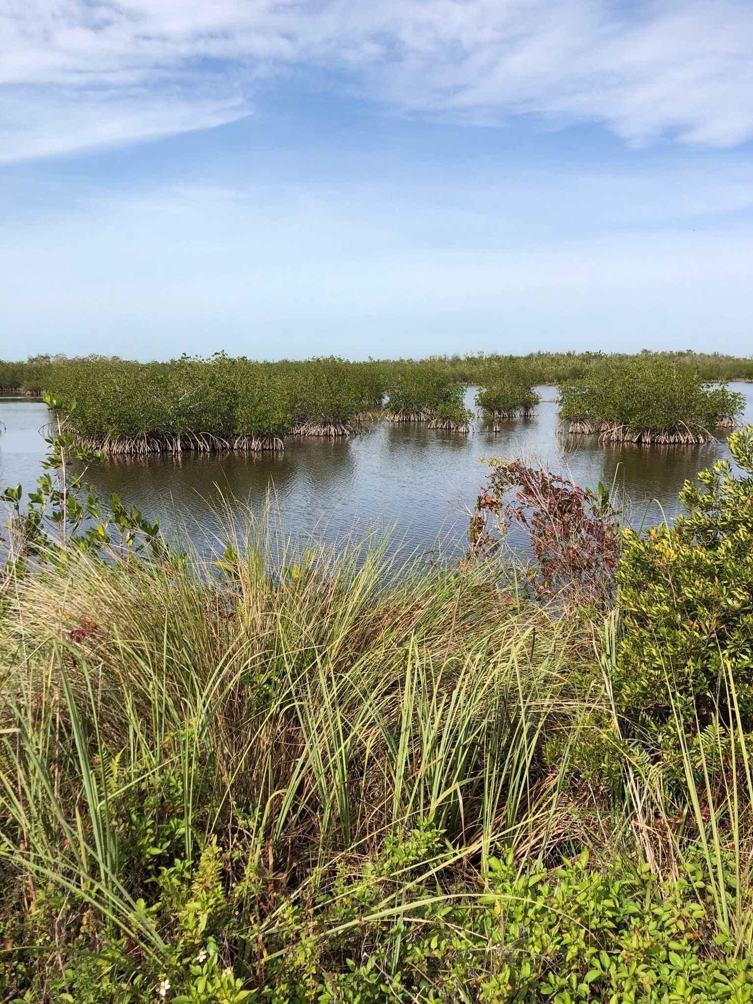 NEW Marsh Trail/Shell Island Boardwalk Photo Hike image