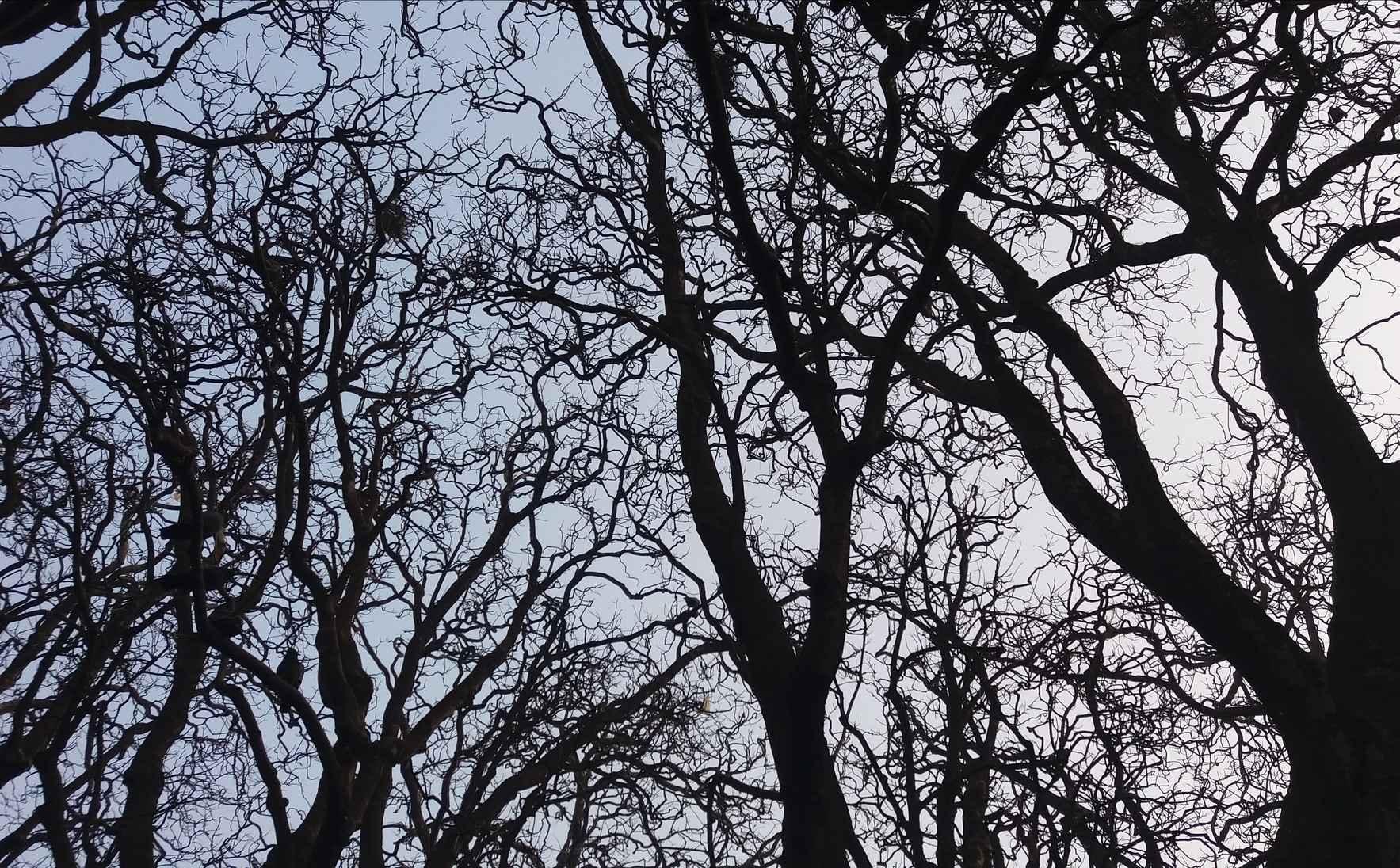 GWC Edible Park Tree Walk image