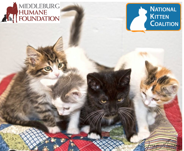 National Kitten Coalition Workshop 2020 image