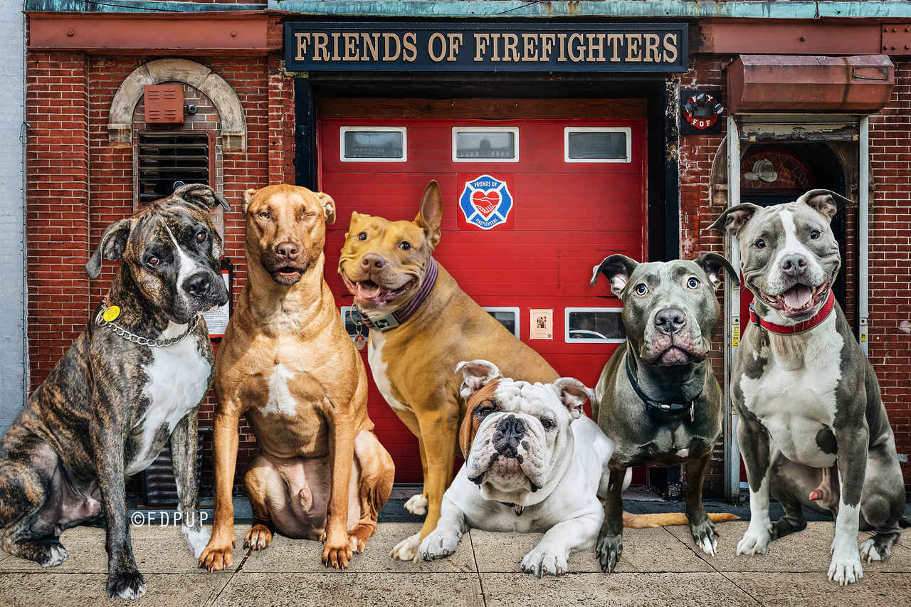 FDNY Pup Love: A Valentine's Day Event to Benefit Friends of Firefighters  image