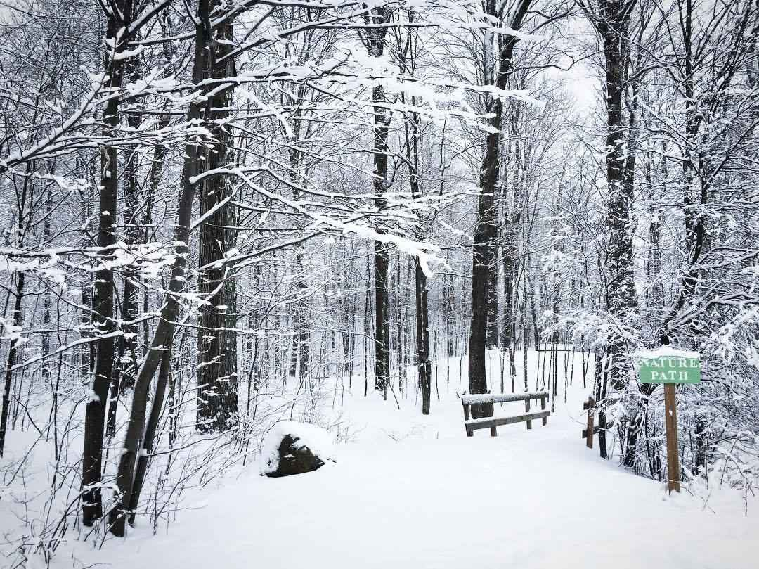 Winter Solsitice Forest Bathing image