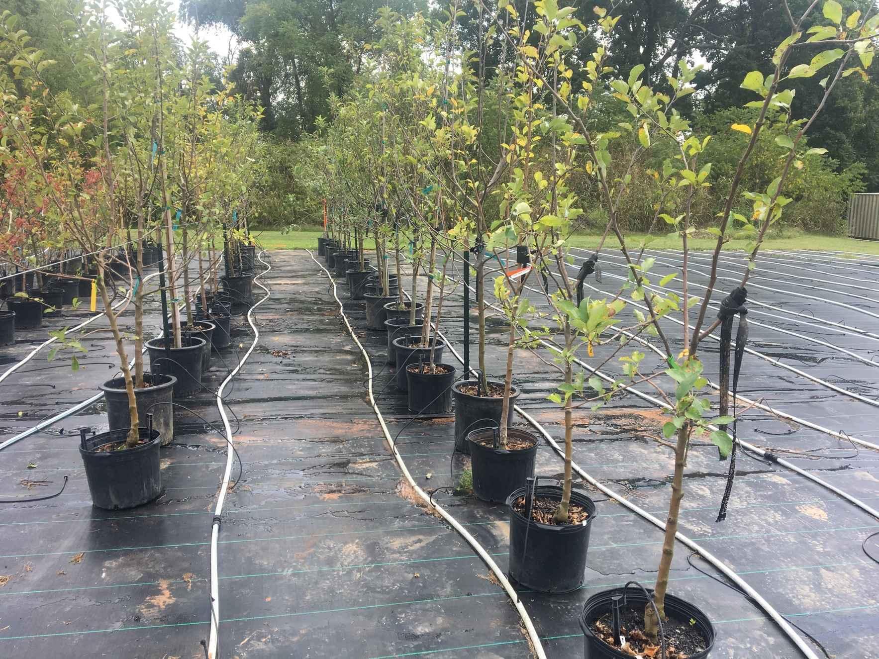 Spring 2020 Tree Giveaway image