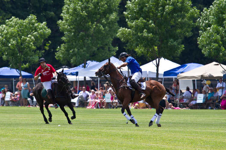 Polo on the Prairie - 2020 image