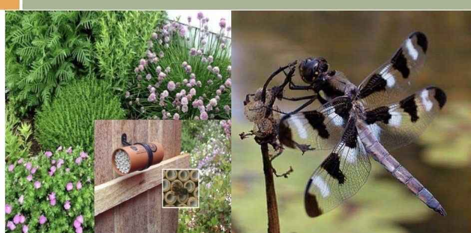 Urban Harvest Grow Resilience - Ecological Pest Management Webinar image