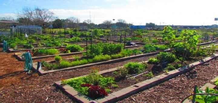 Online Education: Starting a Community or School Garden Workshop image