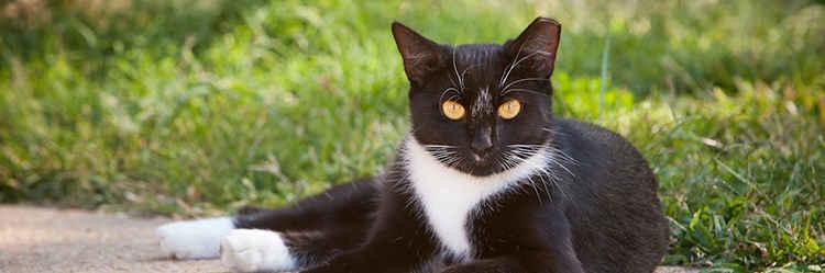 Community Cat Surgery Day 5/24 image
