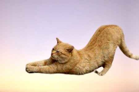 Yoga With Your Pet! image