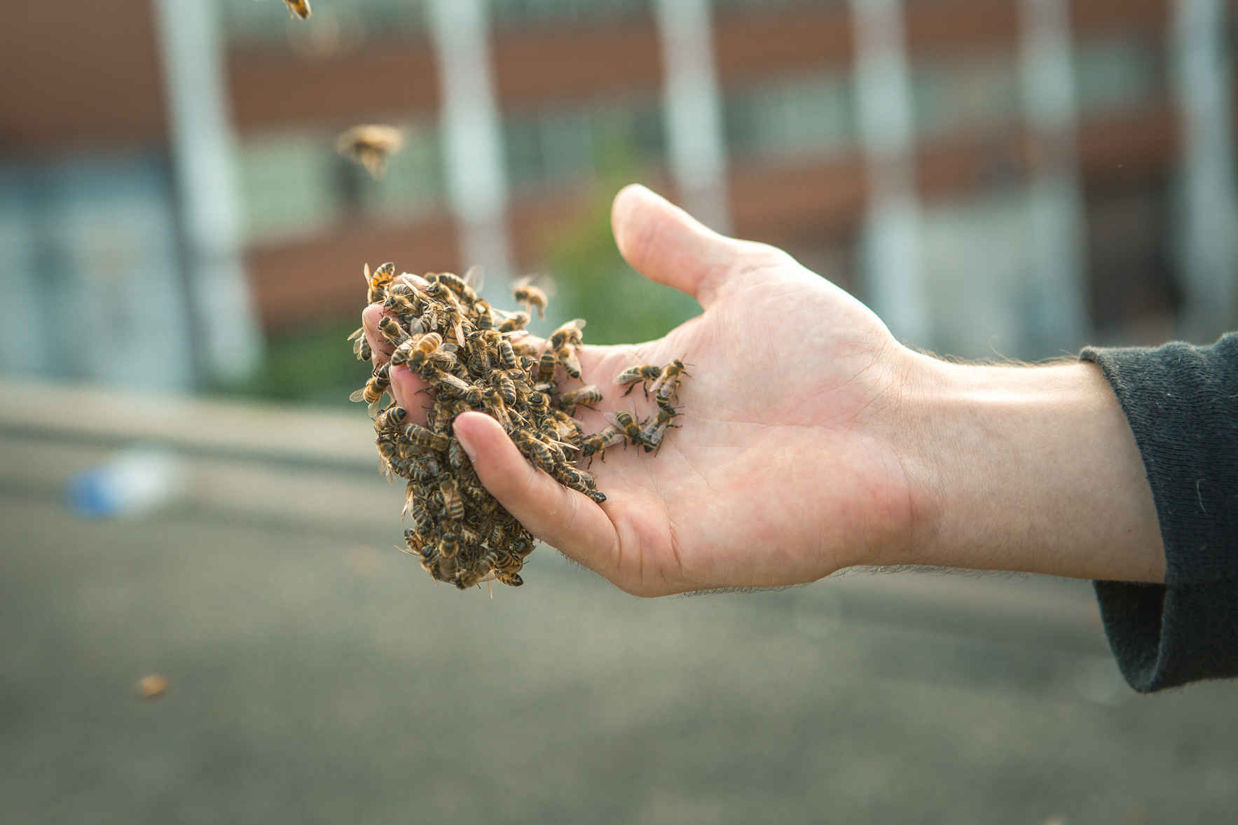 Online Education: Discover the World of Bees image