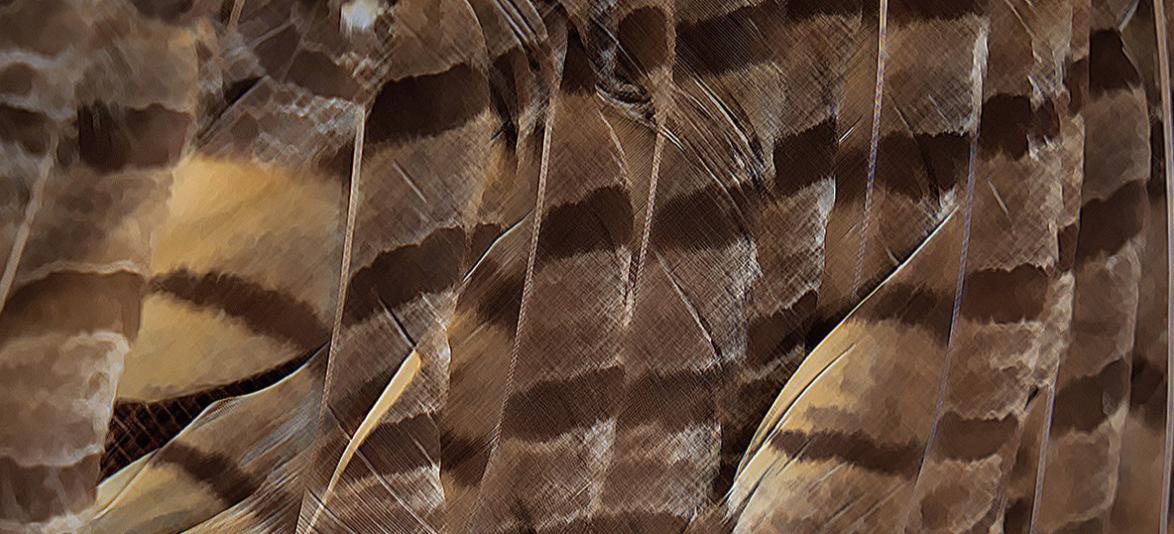 25th Annual Wildlife Arts Festival  image