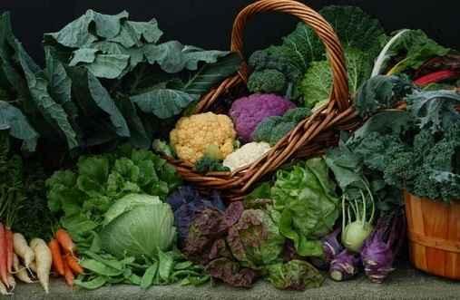 Urban Harvest Classes September - December 2020 image