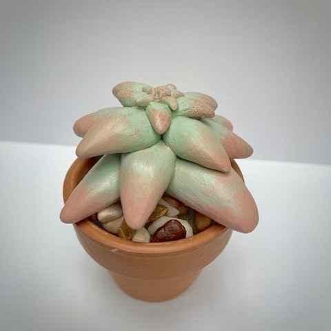 Clay Succulent - Art Kit image