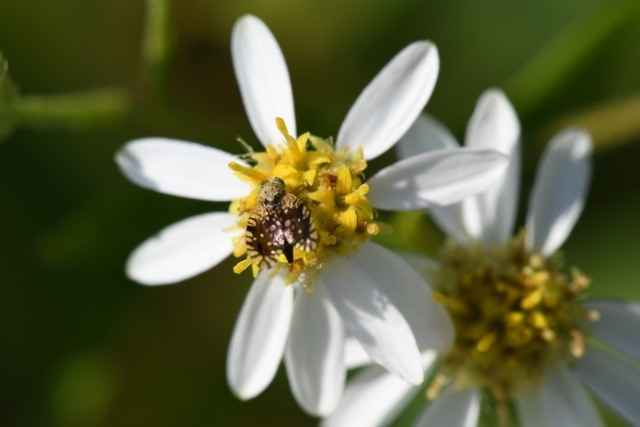 Meadows Abloom: Fall Wildflowers and Their Pollinators  image