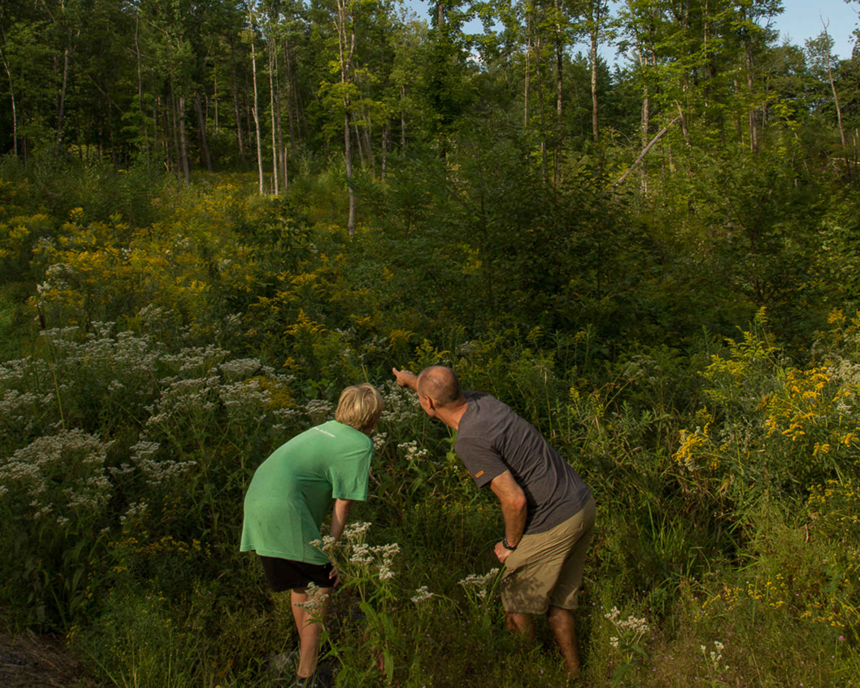 Ecology, Conservation, & Forest Management at the Andrews Community Forest image