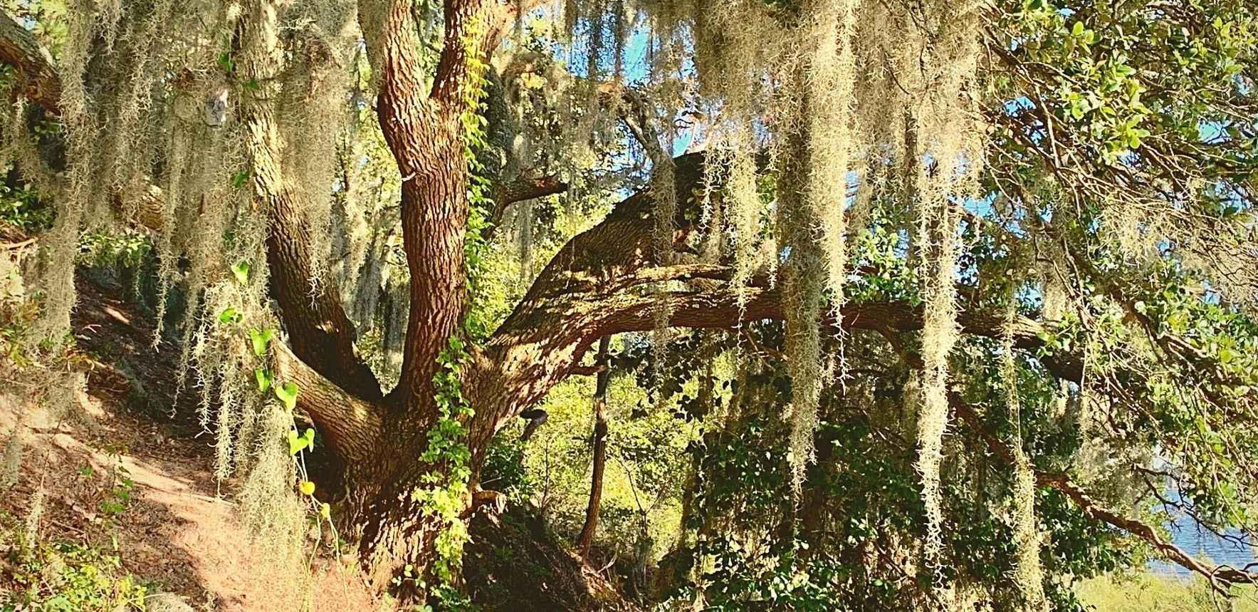 Walk & Talk Trees Hike image