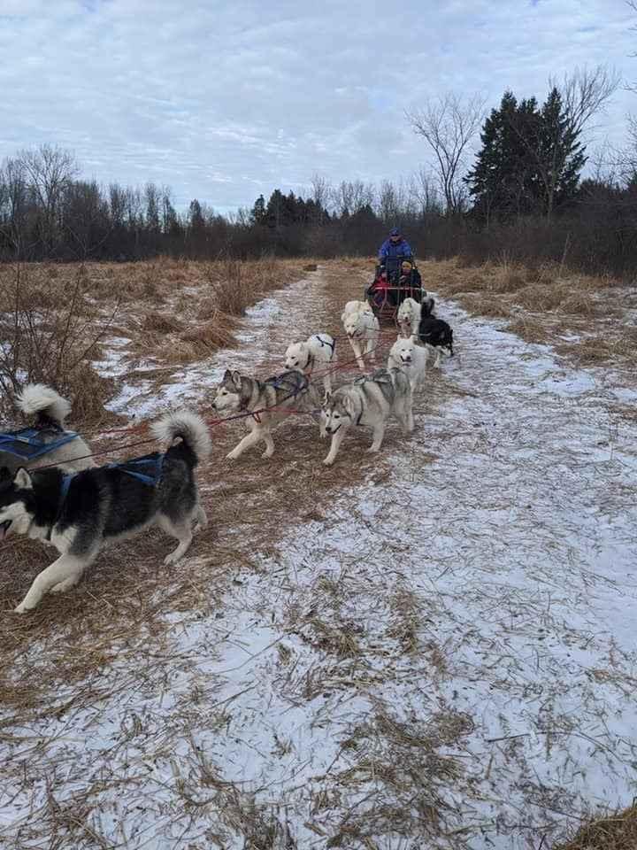 Dog Sledding  image