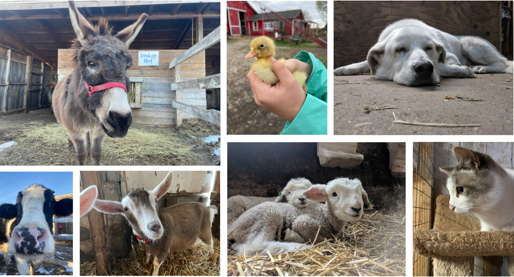 Visit The Critter Barn! image