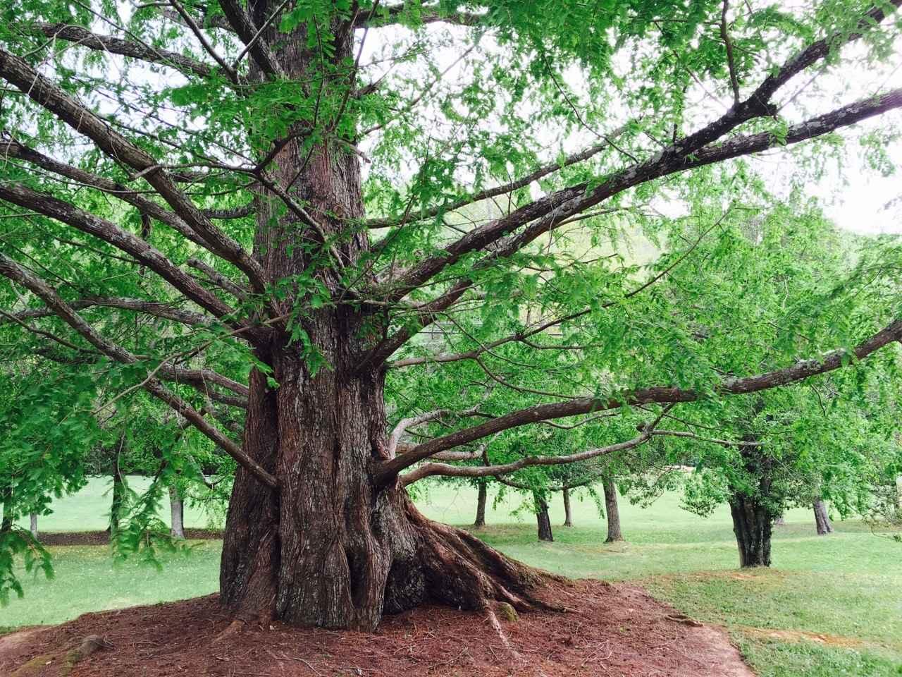 Treasured Trees 2021 Calendar image