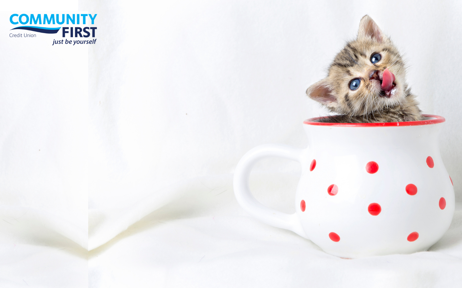 3rd Annual Pop-up Kitten Cafe presented by Community First Credit Union image