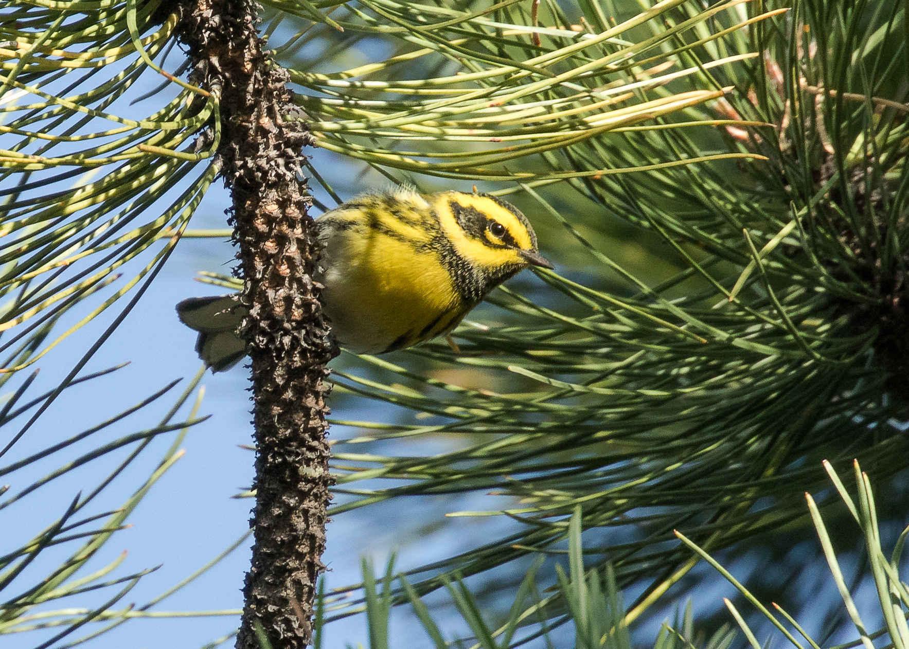 Birding 101 image