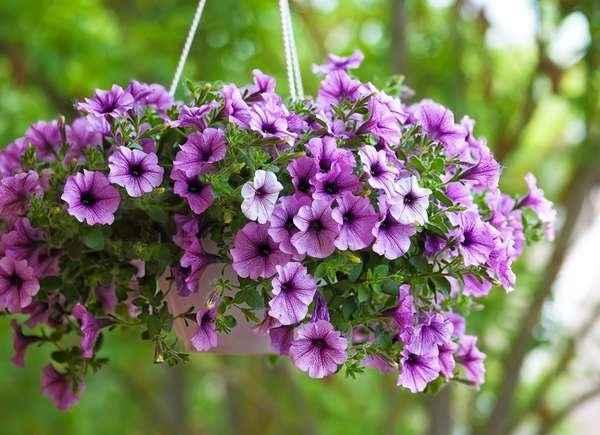Mother's Day Hanging Basket Sale image