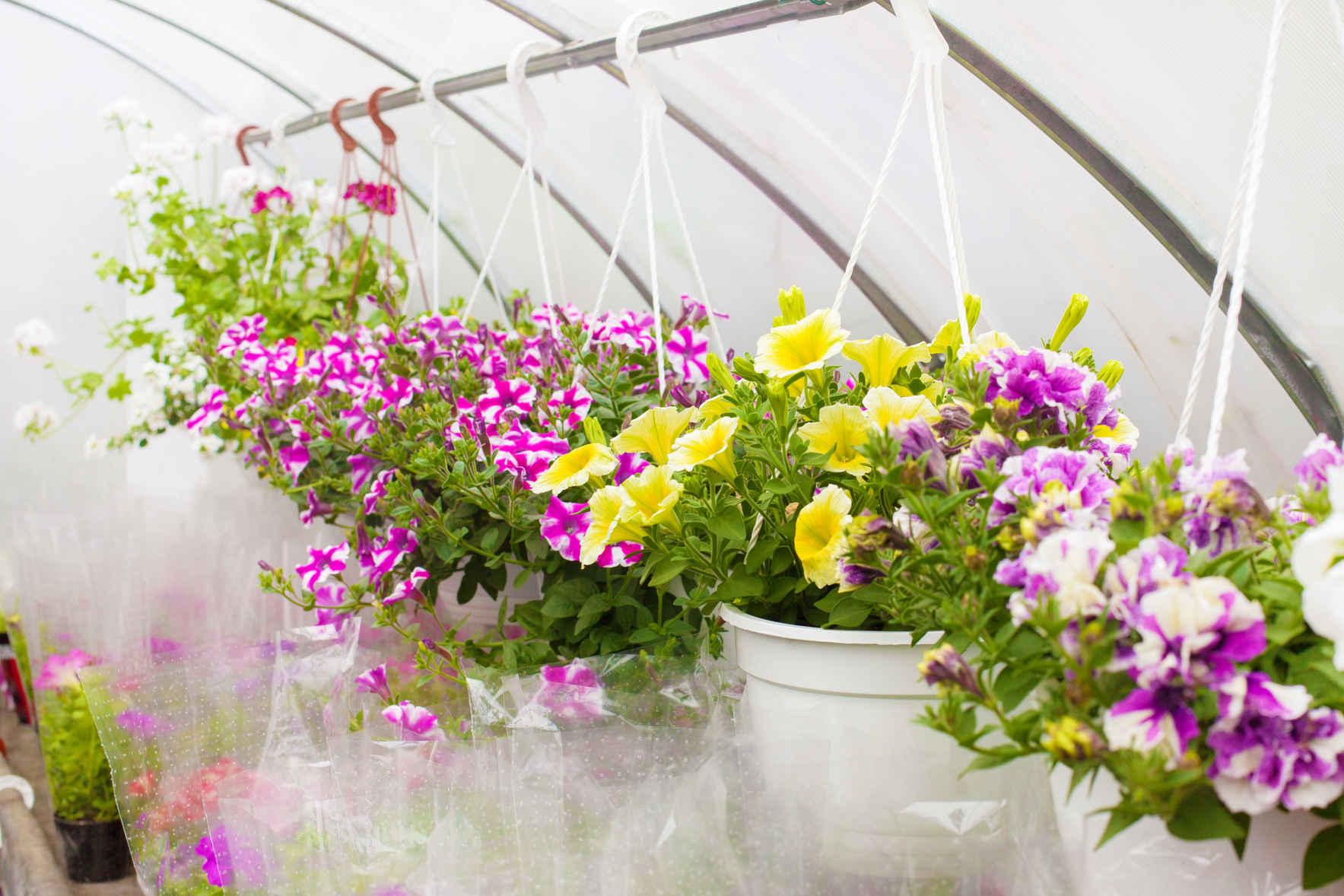 FOCA Annual Plant Sale image