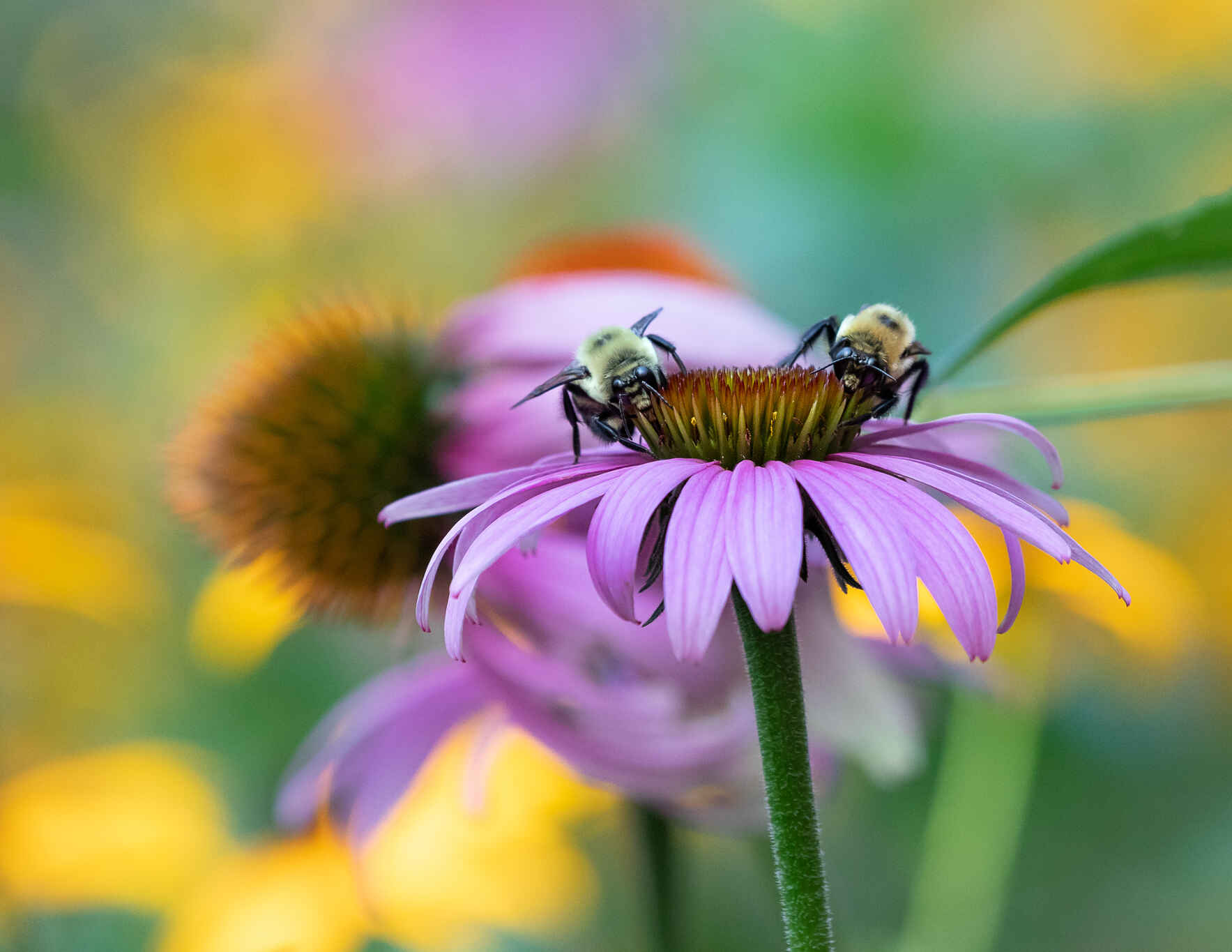Creating a Pollinator-Friendly Garden: Zoom workshop with Lisa Wagner image