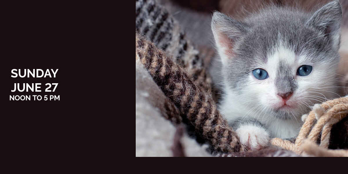 Third Annual Kitten Shower - FREE EVENT image