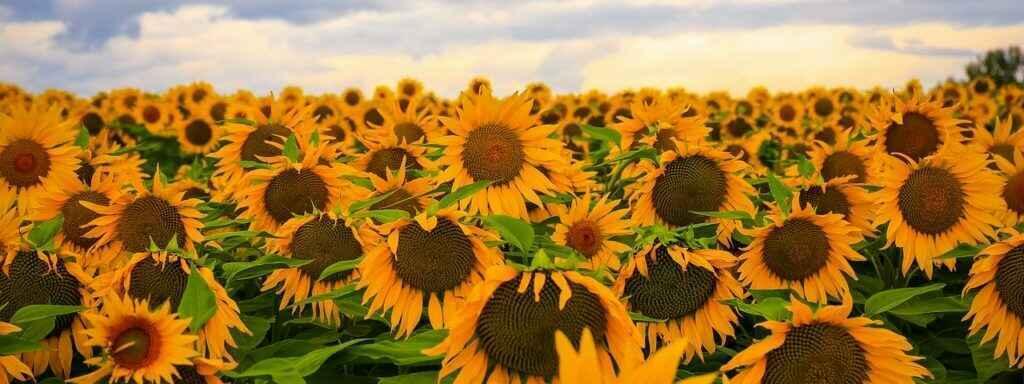 2021 Annual Sunflower Breakfast image