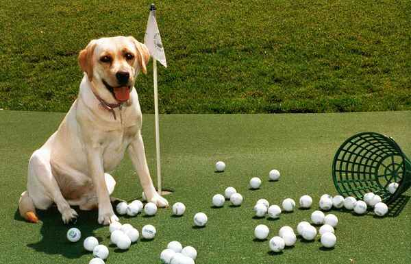 3rd Annual Clare's House Golf Tournament image