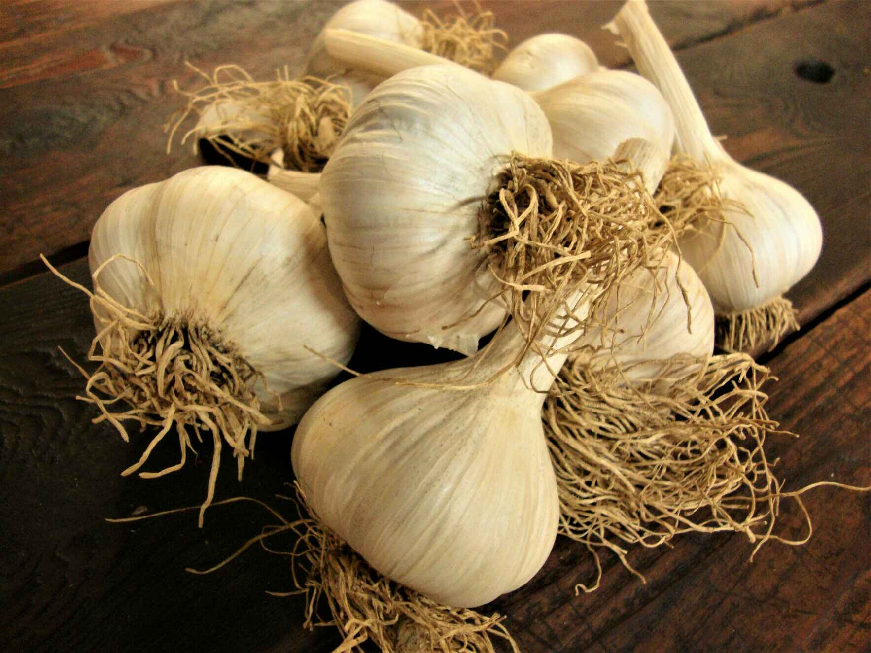Garlic Eating Contest image