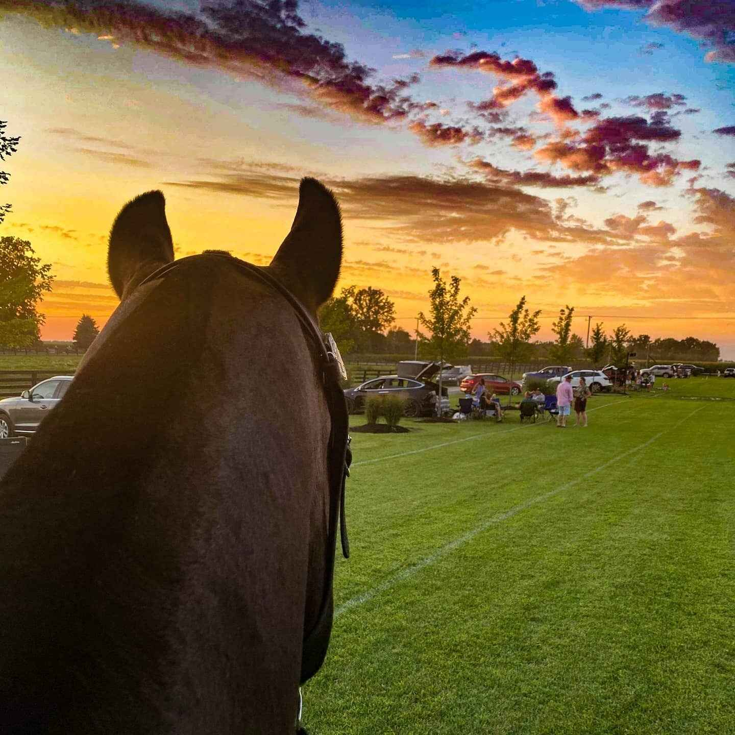 Polo at Sunset - Supporting the IMPD Mounted Police image